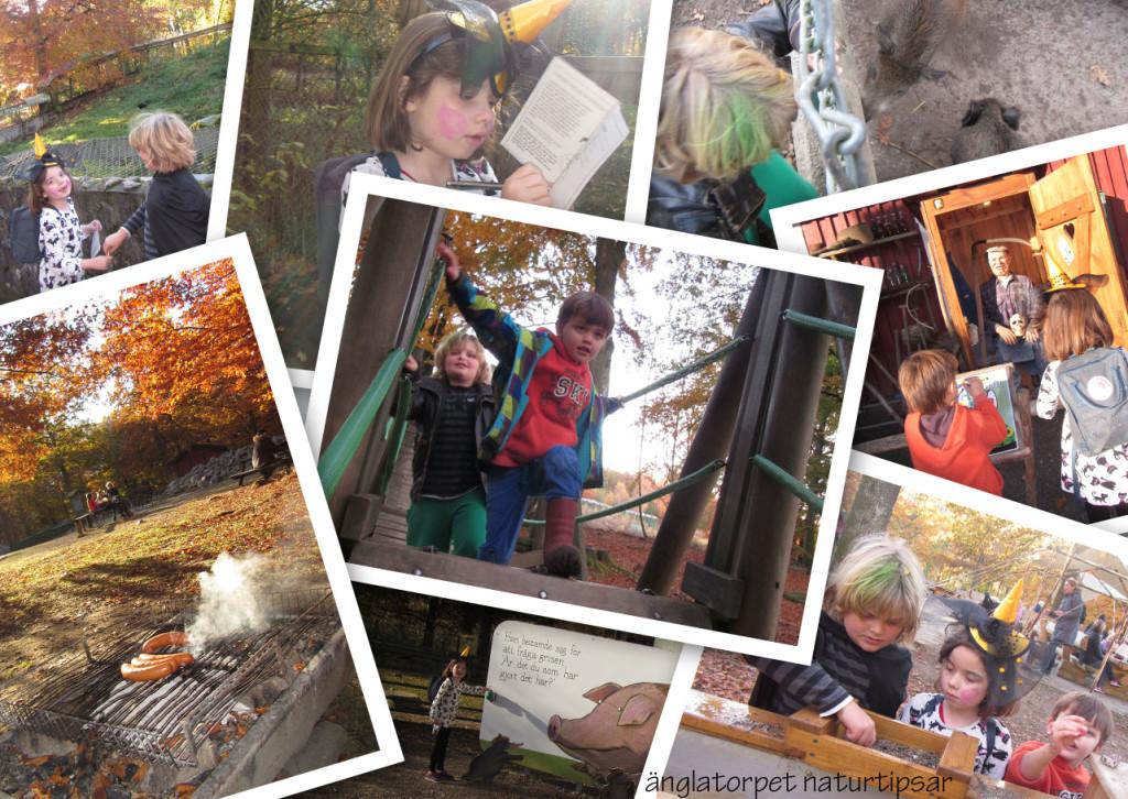 Skånes djurpark är både motion, kunskap, upplevelse och ute.